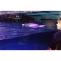 Watching the penguins swim