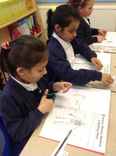 labelling our skeletons with the bone names