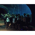 Exploring sea creatures in the tunnel