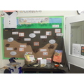 Y3 Rocks & Soils Science display