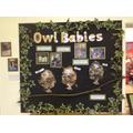 Nursery - Owl Babies