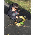 Andy Goldsworthy inspired natural artwork