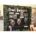 Owl Babies by Nursery