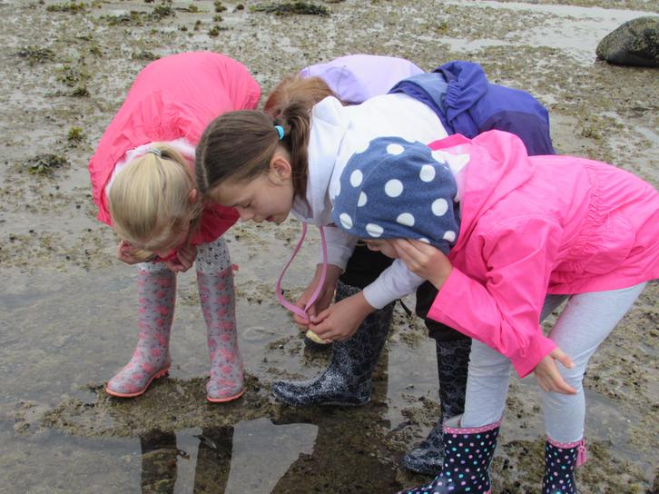 Fossil Hunting at Boggle Hole