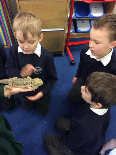 Holding and learning about pets.