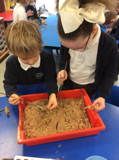 Digging for fossils and bones