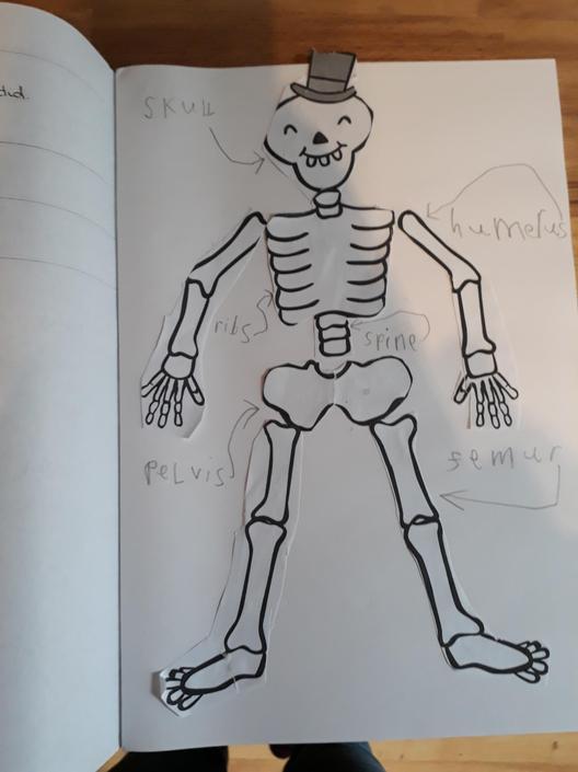Great labelling of key bones in your skeleton!