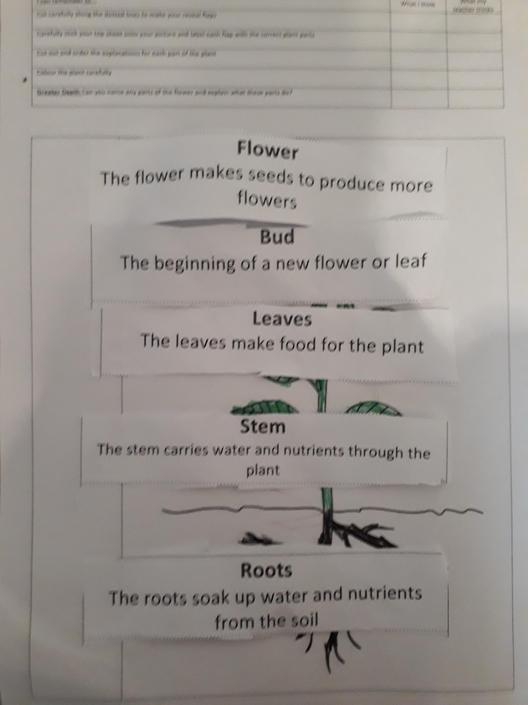 You understand the parts of the plant!