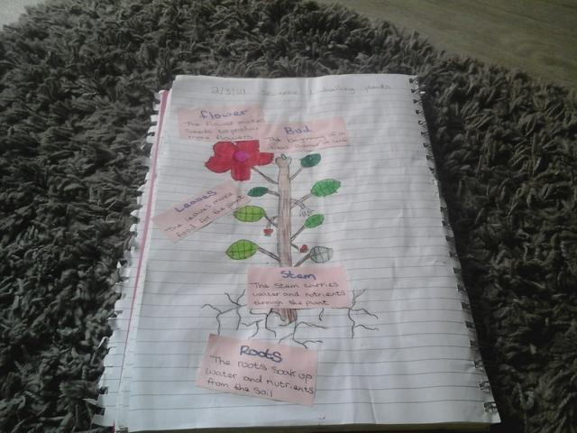 Great drawing and labelling, try your own writing next!
