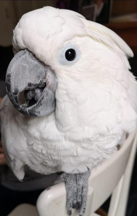 TN has caught a real soupee bird!