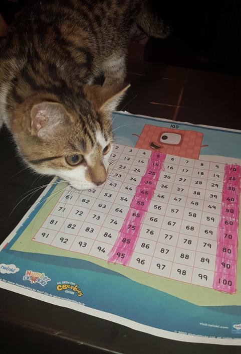 Wow! Counting in 5s is so easy, even cats can do it!