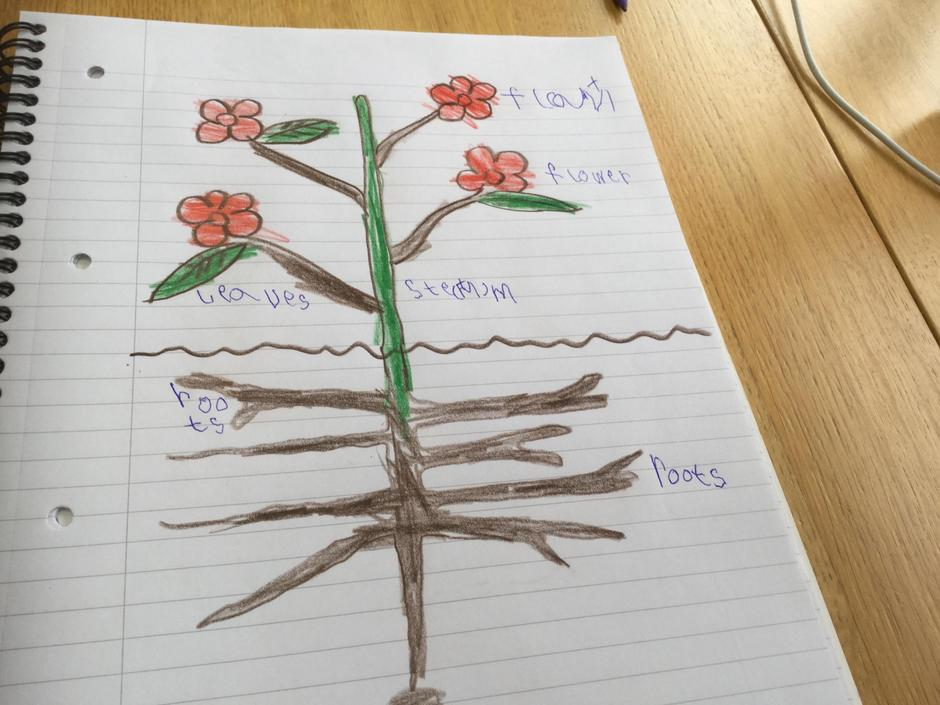 I love your plant drawing!
