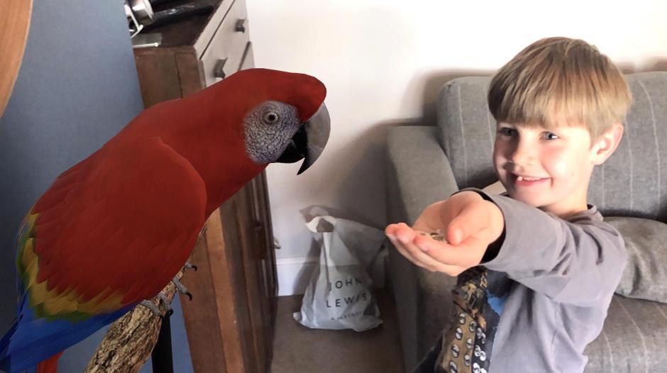 Feeding a Macaw!