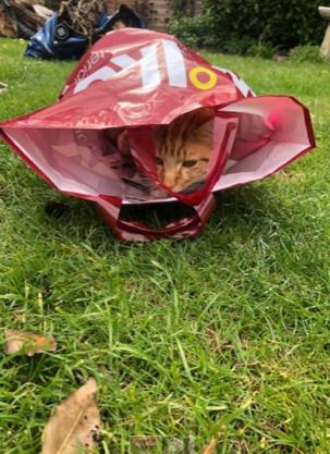 Cat in a bag