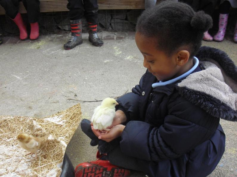 Chicks visit Early Years
