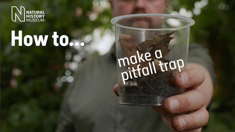 How to make a pitfrall trap