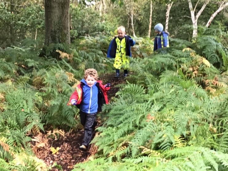 Cygnets Exploring Walton Heath
