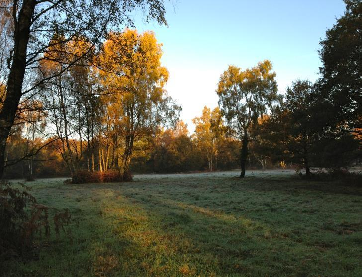 The beautiful Walton Heath
