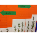 Beanstalk Maths!