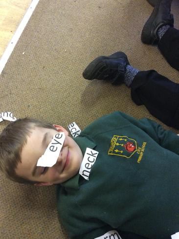 We labelled different body parts.