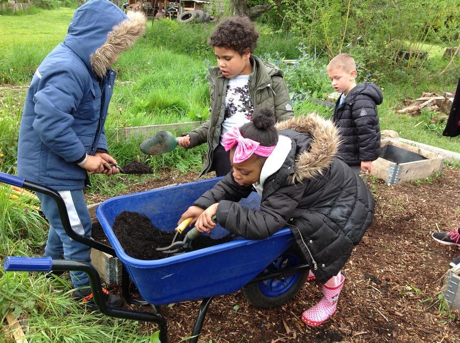 Collecting soil in the Wheelbarrow.