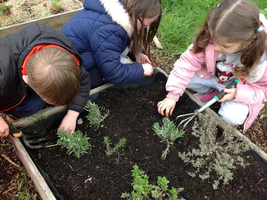 Weeding round our herb garden.