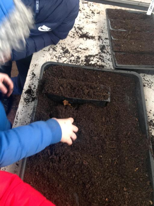 The seeds are for the Gardeners World competition.