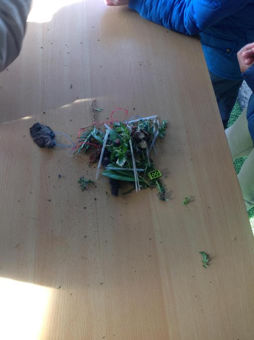 We collected natural items birds would use.