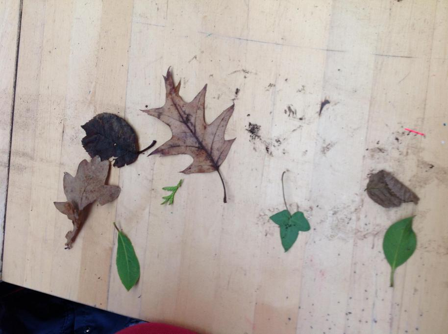 We learned how some leaves change in the Winter.