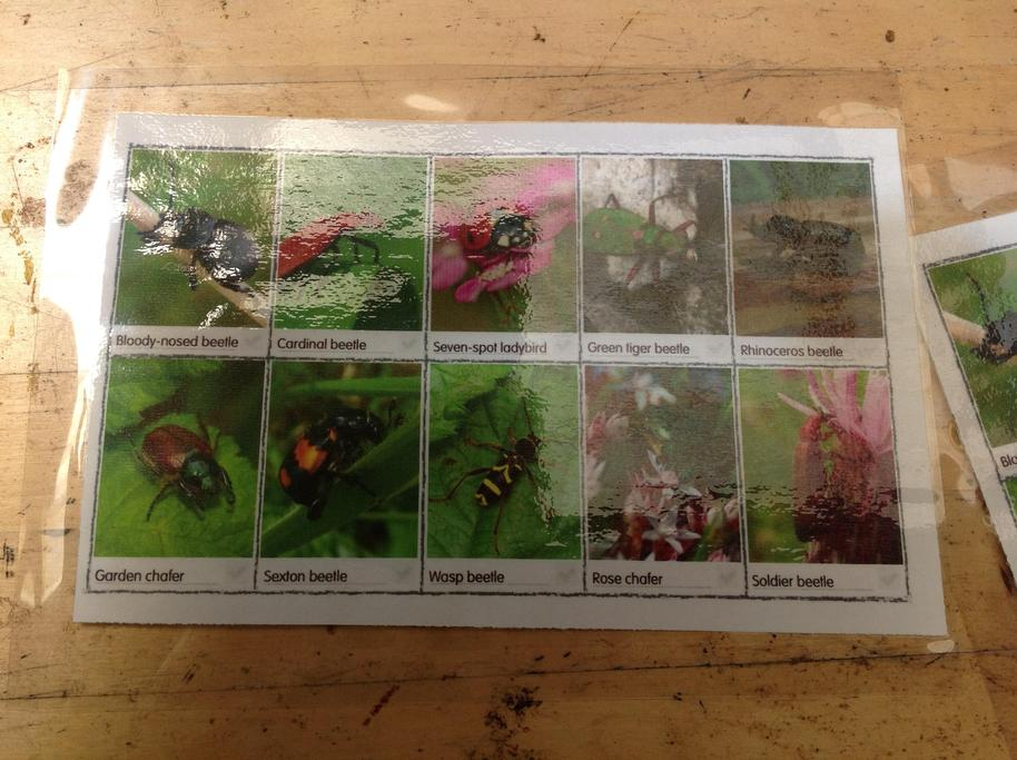 We looked at different types of bugs and their colours.