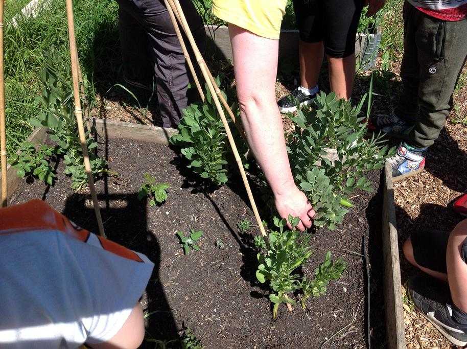We found out that weeds can choke our plants.