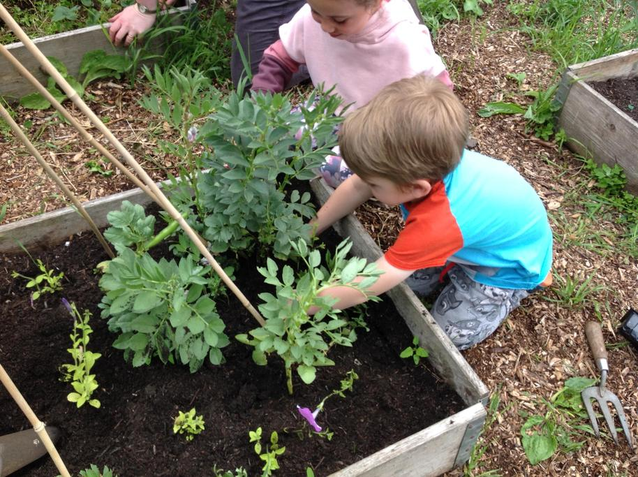 We planted some flowers round our vegetables to attract the bees.