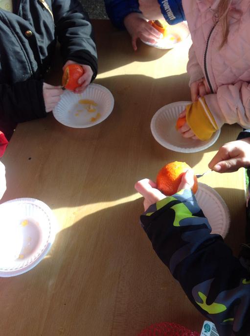 Making bird feeders from oranges.