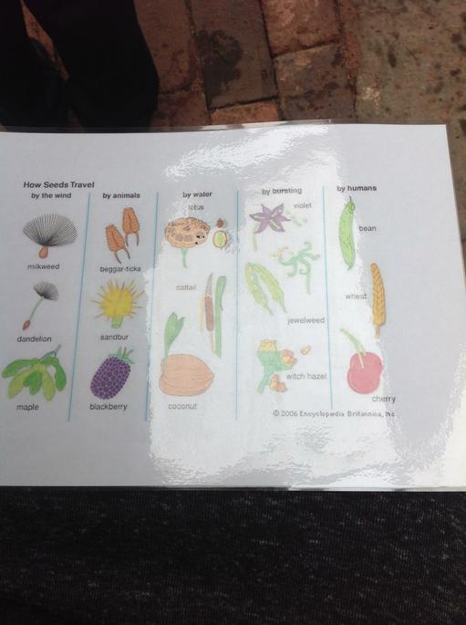 Four ways seeds get around