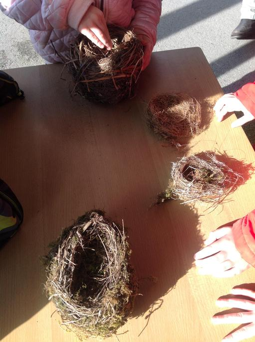 We looked at nests.