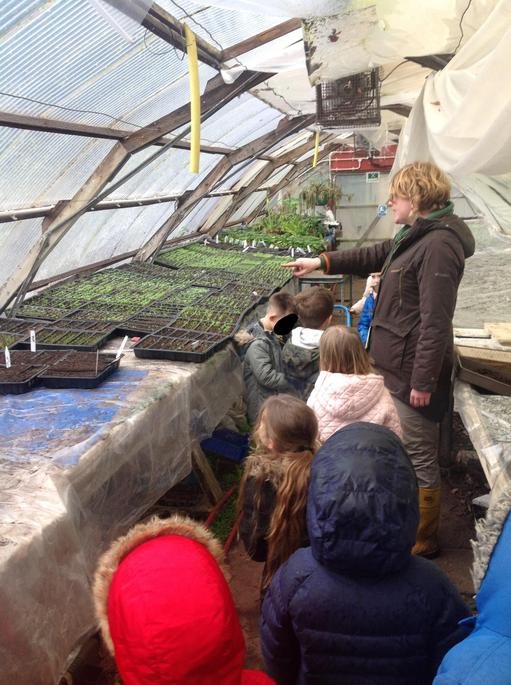 Ther are lots of seedlings in the greenhouse,