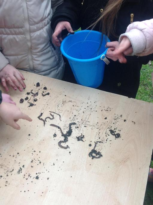 We found a lot of worms which is good.