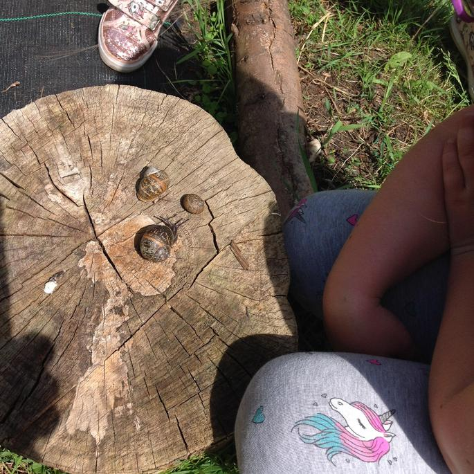 We found some snails.
