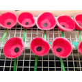 Look at all our amazing Poppies.