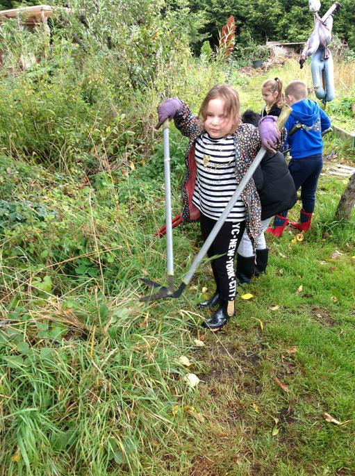 Clearing the weeds from the Allotment