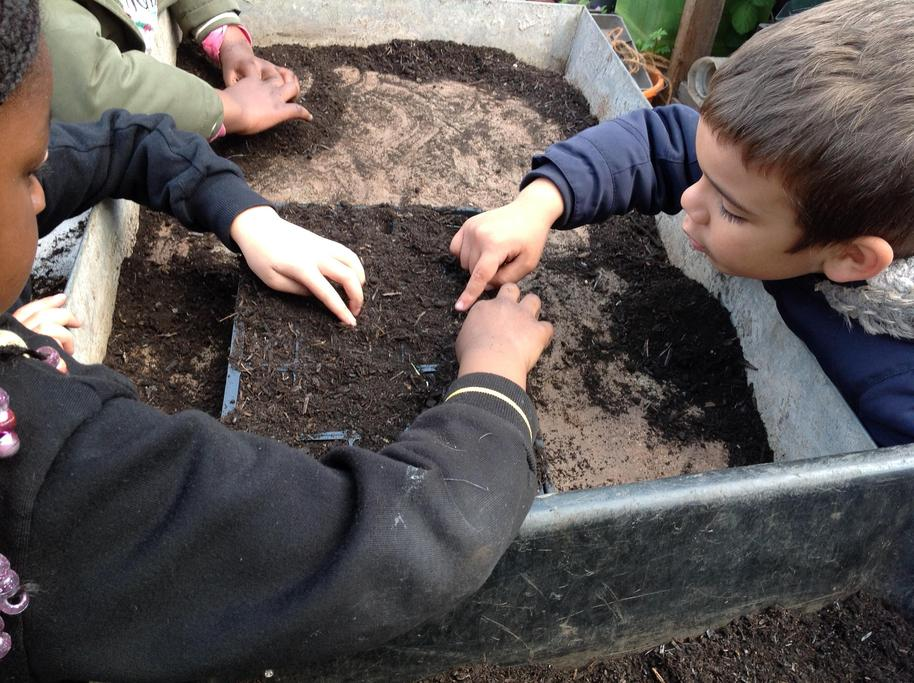 Planting our seeds from last week.