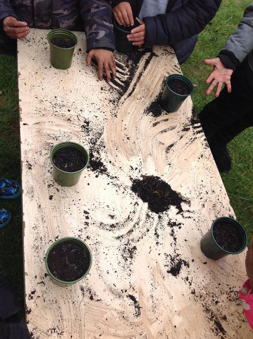 We planted Sunflowers to take home
