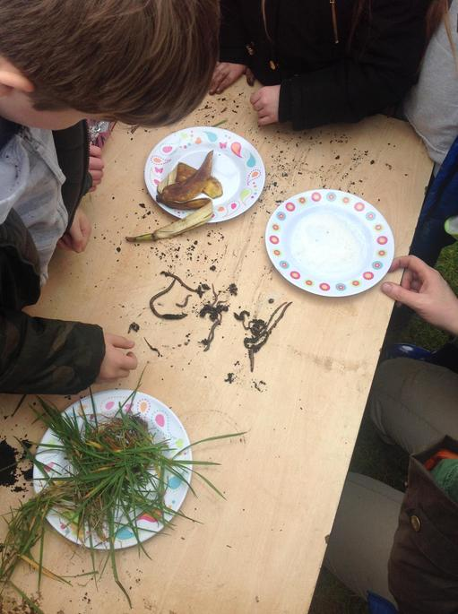 Experiment to see which food worms prefer.