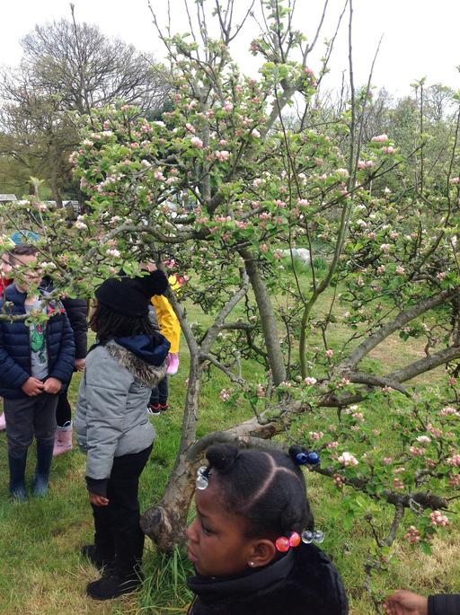 There are lots of Apple trees here