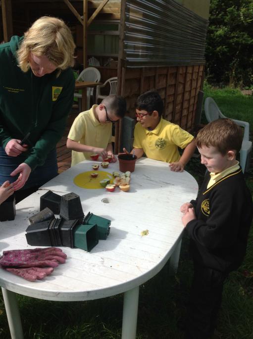Planting Apple seeds to take home