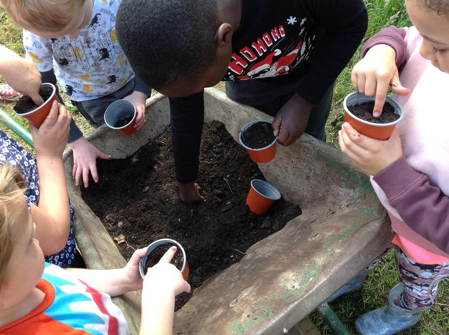 We planted some sunflower seeds.
