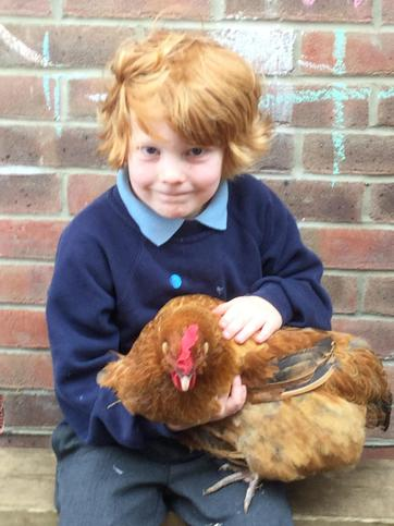 We learnt about chickens.