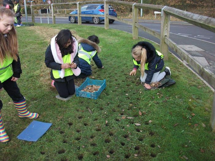 Planting bulbs in the community