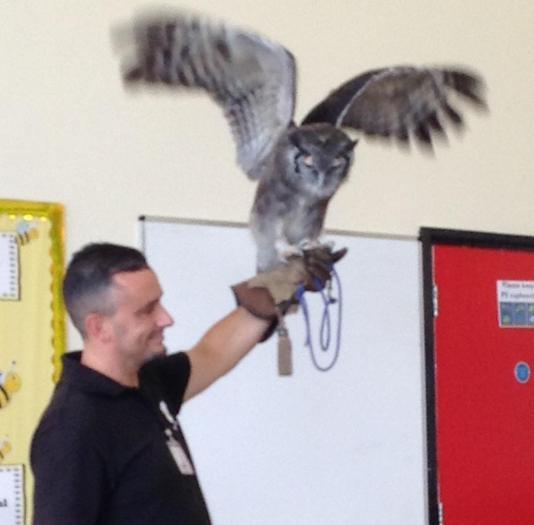 Birds of Prey visit to school