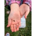 We saw ladybirds!